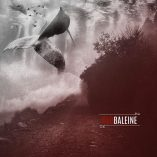 mf054_red baleine_red baleine